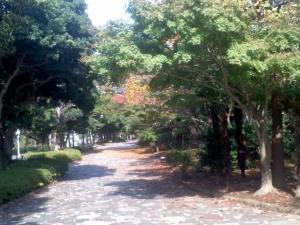 遊歩道の紅葉