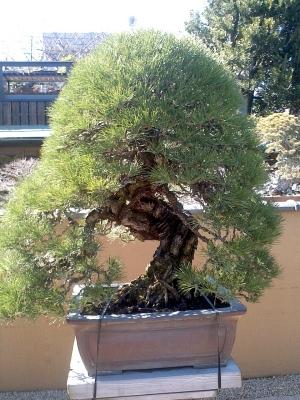 一億円の盆栽