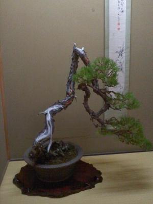 茶室の盆栽