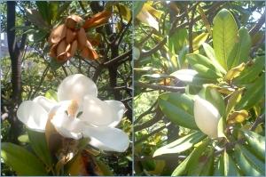 カモメ橋の袂に咲いている花