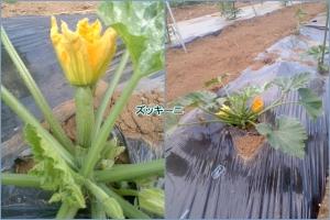 花が咲き実がなって