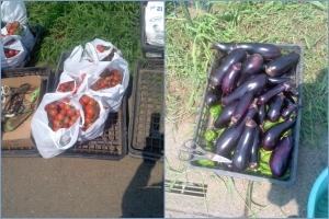 収穫したミニトマトとナス