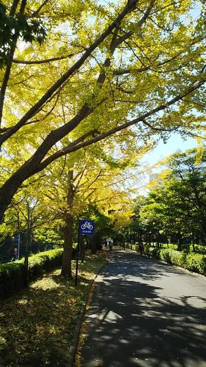 紅葉から木漏れ日